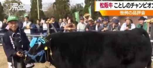 1头牛168万人民币  什么牛为什么卖这么贵(图)