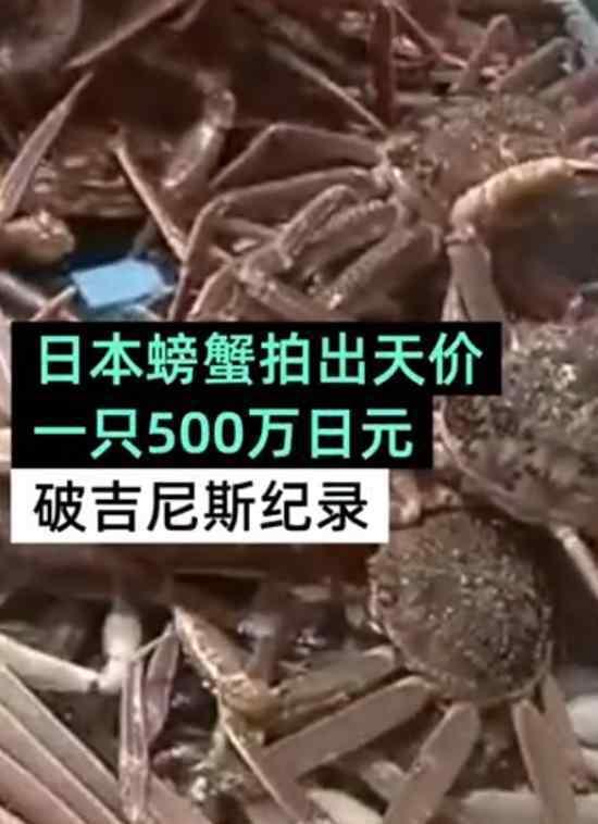 日本螃蟹拍出500万天价 什么螃蟹这么贵