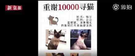 万元寻猫未兑现女子道歉 事件经过具体是怎样的