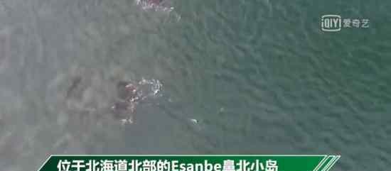 日本一小岛消失  哪个小岛日方领海线将后退