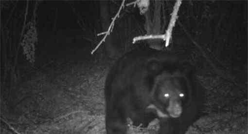 黑熊袭击村民致3死 黑熊在哪里袭击村民什么原因
