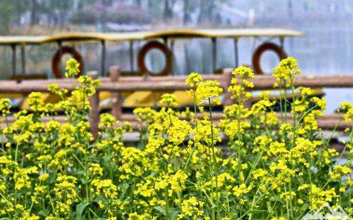 北京清明节去哪里玩 北京清明小长假去哪儿?这些地方人少景也美!