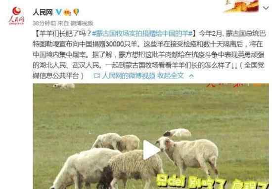 蒙古国牧场实拍捐赠给中国的羊 这次有多少只