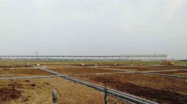 中东沙漠出现稻田,中国科学家的努力终于有了成果