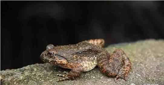 石蛙养殖技术 石蛙养殖新手三个月亏了十万,最终还是撑了下来