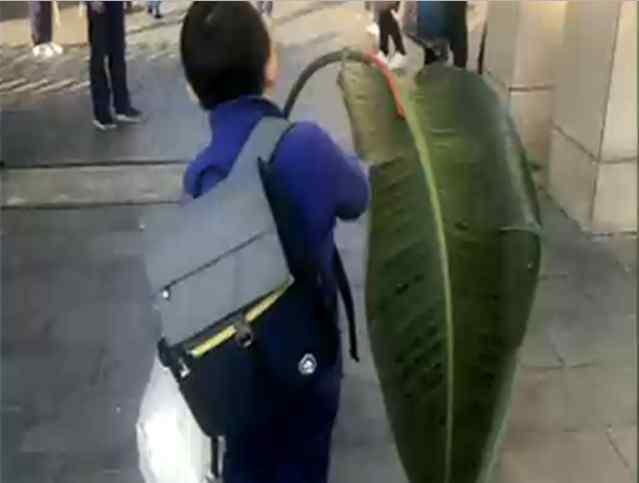 老师要求树叶上写拼音 小朋友扛着一片芭蕉叶来交作业