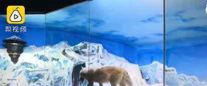 哈尔滨极地馆停业每天成本20万 事件的真相是什么?