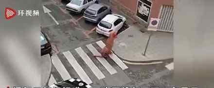 西班牙男子穿魔暴龙服倒垃圾被警告 具体是什么情况