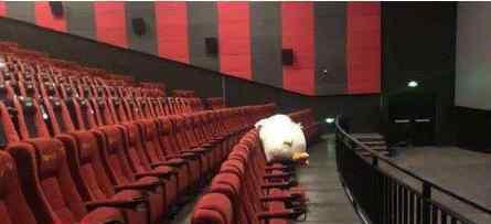 影院上座率提升至75% 为什么会这样