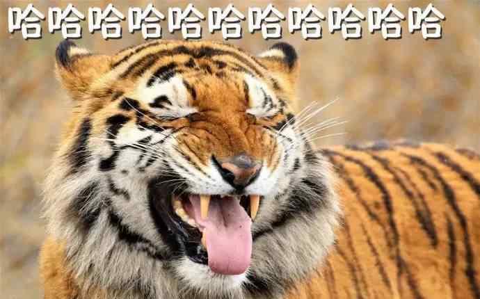 小老虎表情包 一些老虎大王的表情包送给你们,吼哈哈哈