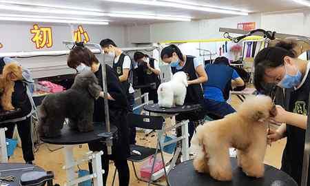 如何做为一个专业的宠物美容师