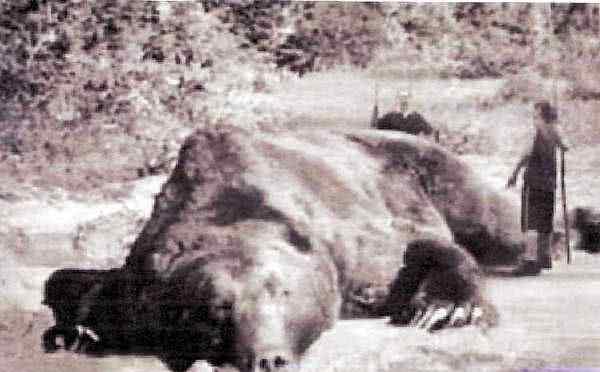 这张惊人的照片是真的吗?它是日本史上头号吃人猛兽