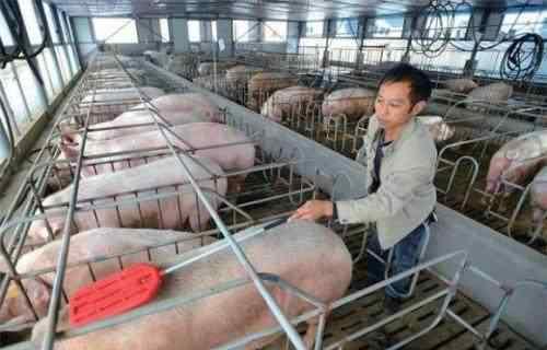 """这农民在农村变废为宝1年赚420万 绝招是""""链条式""""养殖 值得收藏"""