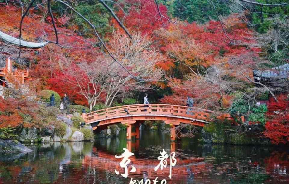 如何正确打卡京都最美的季节?住遍36家酒店后诚意推荐报告!